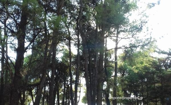 Οικόπεδο-600-Δροσιά